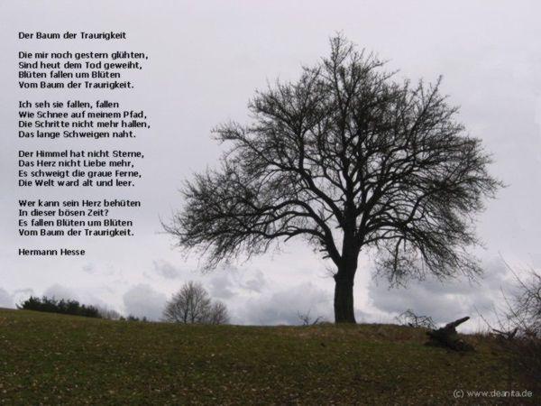 Sprüche Zitate Rudolf Steiner Schöne Zitate Leben